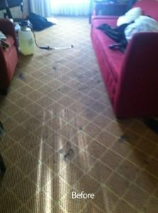 cupertino-Carpet-Clean-before