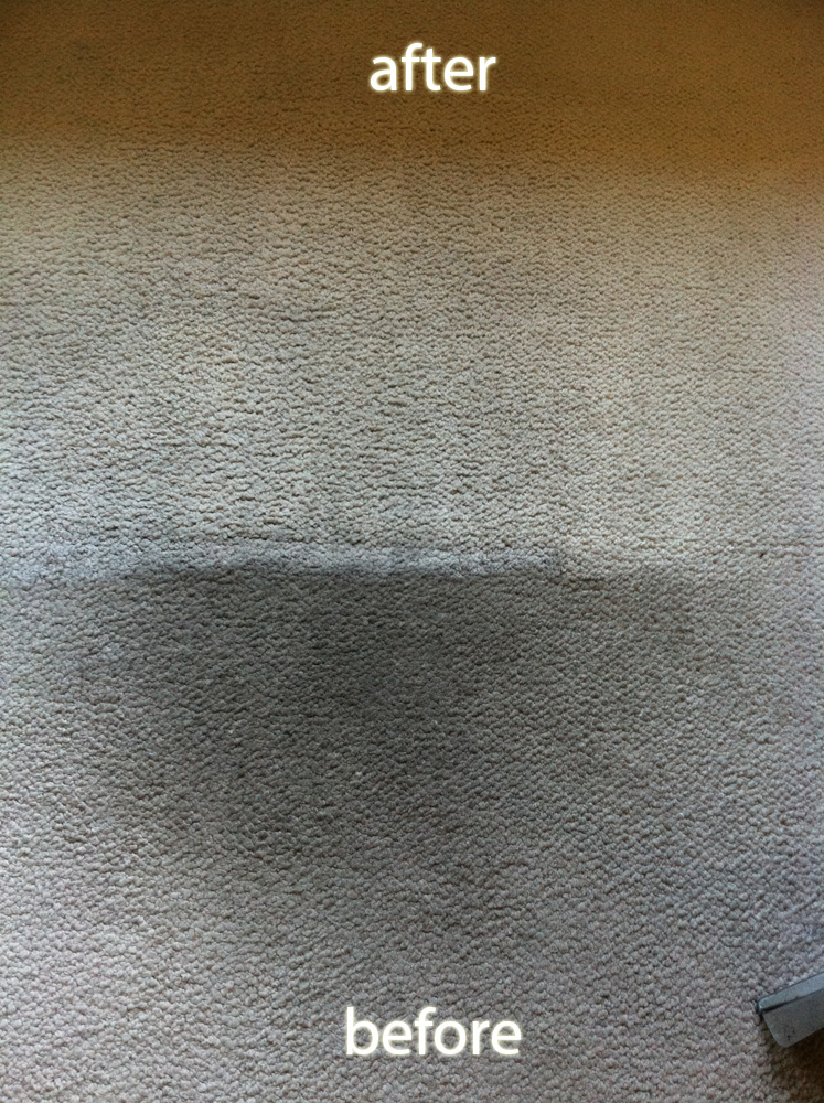 Cupertino Coffee Stain Carpet Cleaning