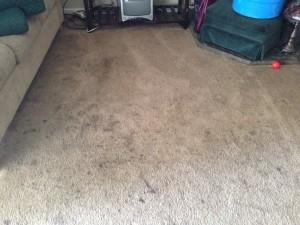cupertino-Dirty-Carpet
